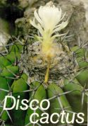 View larger image of 'Discocactus'