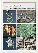 View larger image of 'From Adrian Haworth to Haworthia - Haworthia and related South African Succulents'