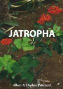 View larger image of 'Jatropha'