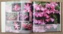 View larger image of 'Schlumbergera (large format)'